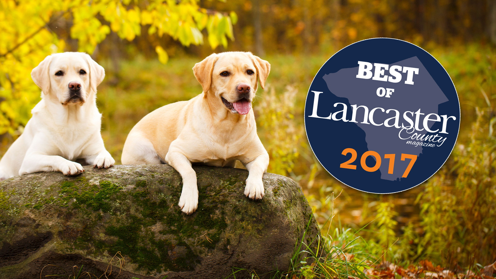 2017 Best of Lancaster - Best Veterinary Practice & Best Veterinarian