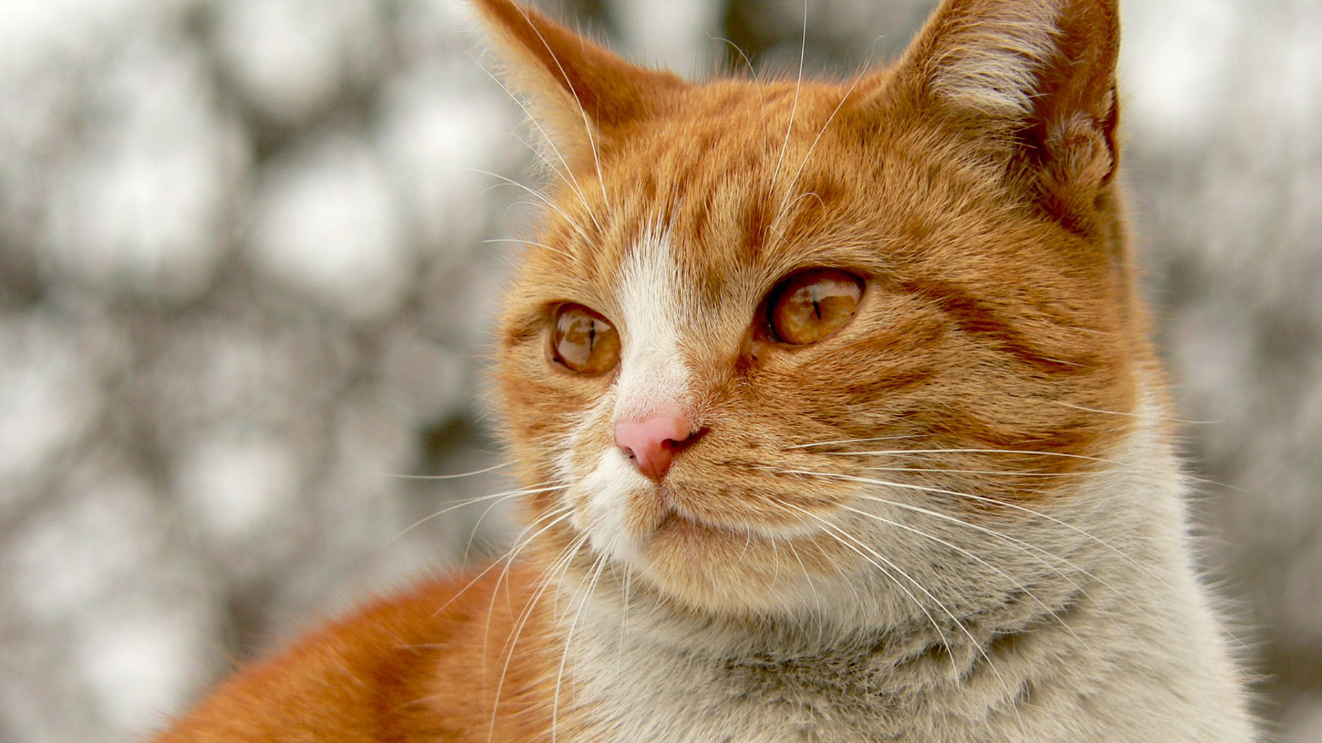 Best of Lancaster Veterinary Care for Cats