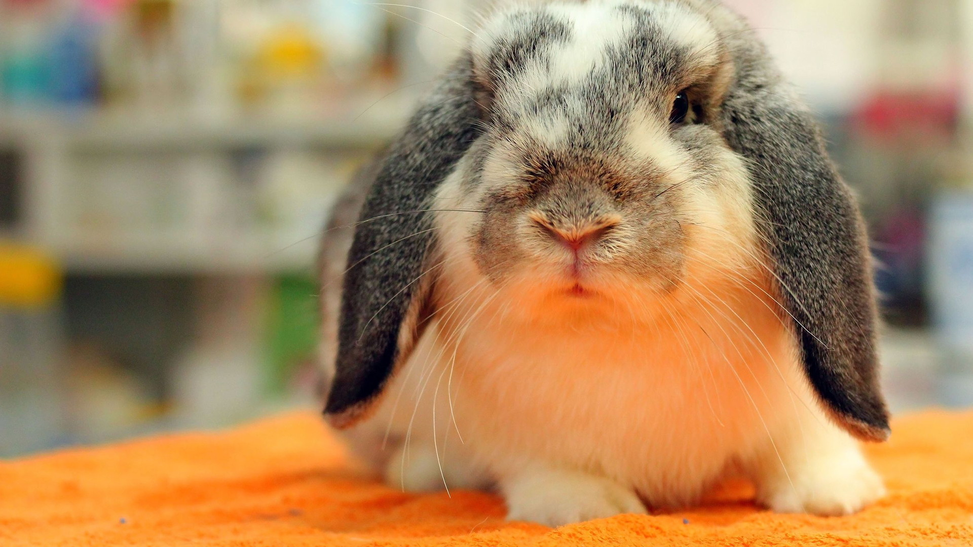 Best of Lancaster Veterinary Care for Rabbits and Pocket Pets