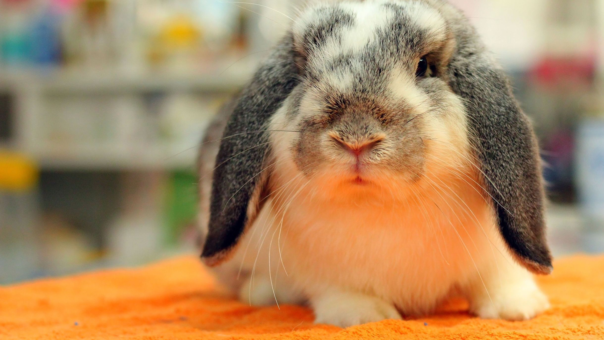 Veterinary Care for Rabits and Pocket Pets
