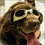 Dr. Keller Discusses Laser Therapy With Lancaster County Pet Magazine