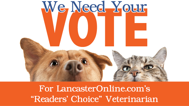 Vote for LancasterOnline.com's Readers' Choice Veterinarian